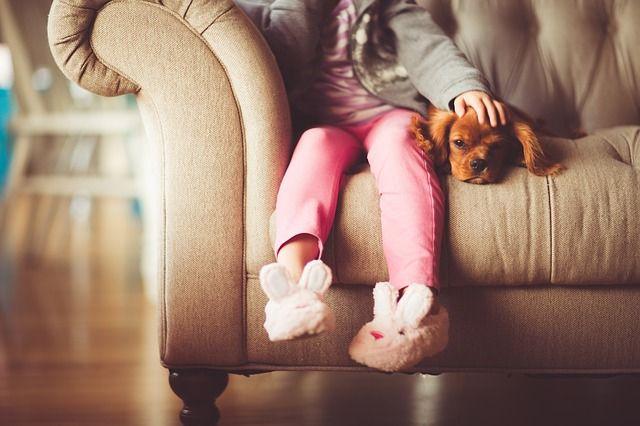 Hygiene im Haushalt mit Haustieren