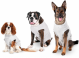 Hunde Safety Body zum Schutz vor Wunden