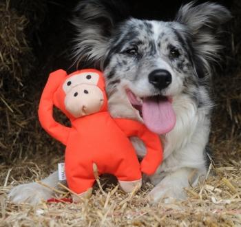 Beco Affe Stofftier für Hunde mit Quitschie